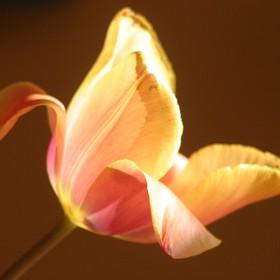 liefde warmte licht